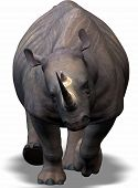 A Rhino Coming Up To You
