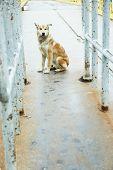 foto of mongrel dog  - Mongrel dog outdoors - JPG
