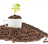 foto of coffee coffee plant  - Green plant growing from the cup full of beans in a pile of coffee - JPG