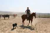 Cowboy And Horse And Dog