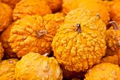 Orange Warted Gourds