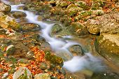 Autumn Mountain Rivulet