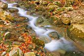 Autumn Mountain Rivulet