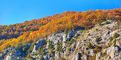 Autumn Wood On A Rock