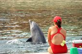 Dolphin In Training