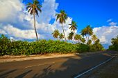 Tropical Road