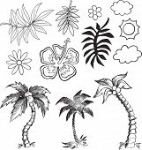 stock photo of hawaiian flower  - Tropical Hawaiian Vector Illustration - JPG