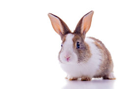 image of bunny rabbit  - Cute bunny with curious look looking at the camera - JPG