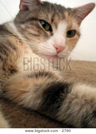 Close-Up Cat poster