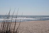 Beach Scene Wth Seagrass