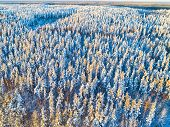 Aerial View Of A Winter Snow-covered Pine Forest At The Sunset. Winter Forest Texture. Aerial View.  poster