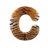 Tiger letter C - large 3d Feline fur font isolated on white background. This alphabet is perfect for poster