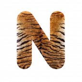 Tiger letter N - Uppercase 3d Feline fur font isolated on white background. This alphabet is perfect poster