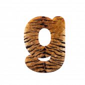 Tiger letter G - Lowercase 3d Feline fur font isolated on white background. This alphabet is perfect poster