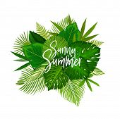 Exotic Sunny Summer Poster With Green Leaves Of Tropical Palm Tree. Beach Party Invitation Or Summer poster