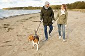 pet, domestic animal and people concept - happy couple walking with beagle dog on leash along autumn poster