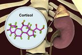 Molecule Of Cortisol Hormone And Adrenal Gland, 3d Illustration. Cortisol Is A Steroid Hormone Of Gl poster