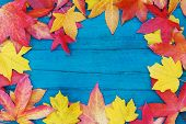 In Autumn, The Fallen Dry Leaves Of Yellow, Red, Orange Color Line The Perimeter Of The Frame On An poster