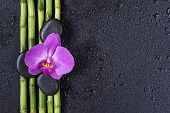 Spa Concept With Black Basalt Massage Stones, Pink Orchid Flower And A Few Stems Of Lucky Bamboo Cov poster