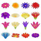 Detailed Flowers Icons Set. Cartoon Illustration Of 16 Detailed Flowers Icons For Web poster