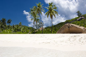 picture of beach holiday  - Palm - JPG
