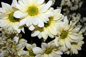 bouquet offlowers