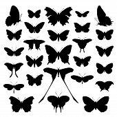 Butterflies Silhouette Set.