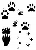 Paw Prints - Animal Tracks W/ Working Path