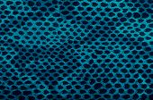 Blue Python Snake Skin
