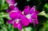 Beautiful Bright Orchid Flowers In Botanical Garden