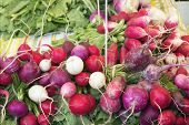 Heirloom Radish Bunches At Farmers Market
