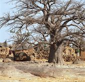 foto of dogon  - Traditional Graineries in Dogon village Lower Idjeli Mali, West Africa