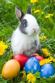 The Small Rabbit And Colourful Easter Eggs In A Grass