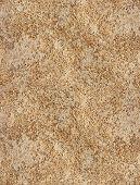 Seamless Texture Coquina