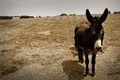 Donkey in the farm in sepia color