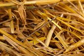 Needle in a haystack close-up