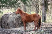 Breakfast Time  Red  Brown Horse