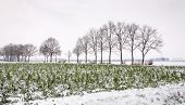 Farmland In The Snow