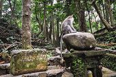 Long-tailed Macaques (macaca Fascicularis) In Forest, Bali Ubud