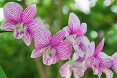 image of orquidea  - Beautiful pink Orchids and green bokeh background - JPG