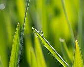 A Dewdrop On The Green Grass In Sunlight