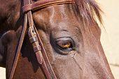 Detail horse eye