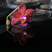 Beautiful Spa Concept Of Zen Stones With Drops, Purple Orchid (phalaenopsis) And Bud,