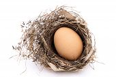 chicken egg in a nest