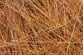dry grass - abstract natural background