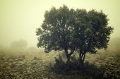 Trees in the fog, Zaragoza province, Aragon, Spain.