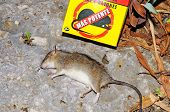 Deat rat and rat poison.