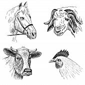 foto of horse face  - animal faces - JPG