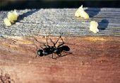 One Ant