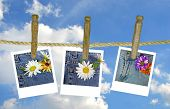 daisy photos on clothesline